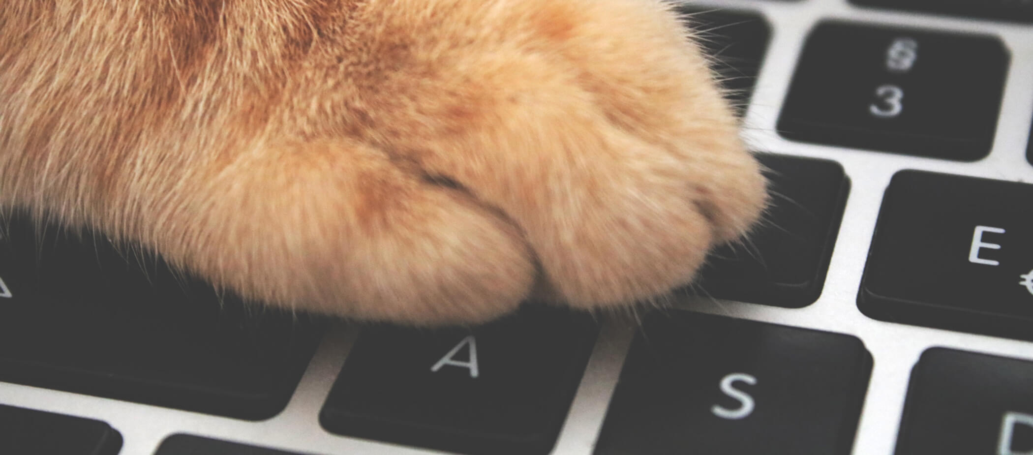 cat-keyboard